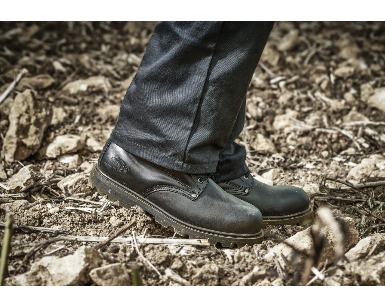 3e1d9cd8c60 Dickies Cleveland Super Safety Boot | Bodyguard Workwear